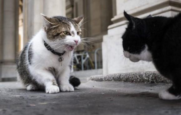 70年前から続く、イギリスの公務員として働く猫たちの確執