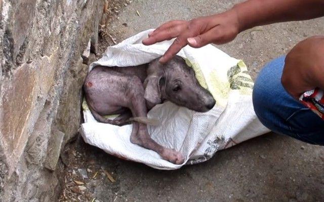 Animal Aid~「痛いよ、怖いよ!助けて!」道端でケガをしておびえ切った子犬の保護作戦