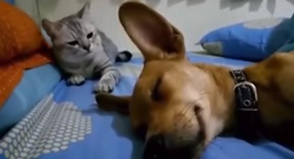 なにしとんじゃい!猫が犬に猫パンチ。その理由とは?