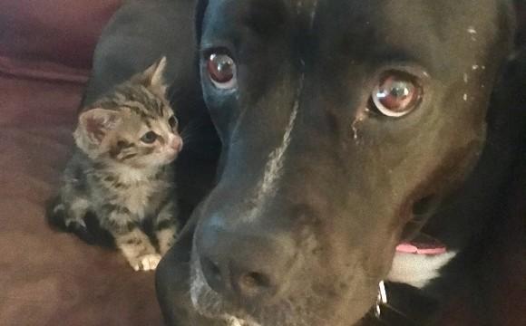 迷い子猫を発見。一晩だけ保護するはずが、先住犬を母のように慕うもんだから予想外のハッピーエンドに(アメリカ)