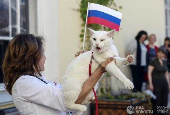 サッカーのワールドカップ、猫が開幕戦の勝者をズバリ言い当てた!「サイキック猫」と話題のアキレスさんにズームイン!