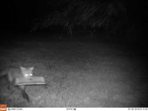fox-2 [www.imagesplitter.net]