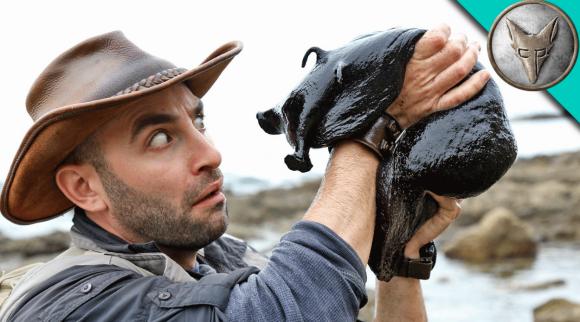 黒猫?と思ったらヌルヌルだった。猫サイズの巨大アメフラシが発見される