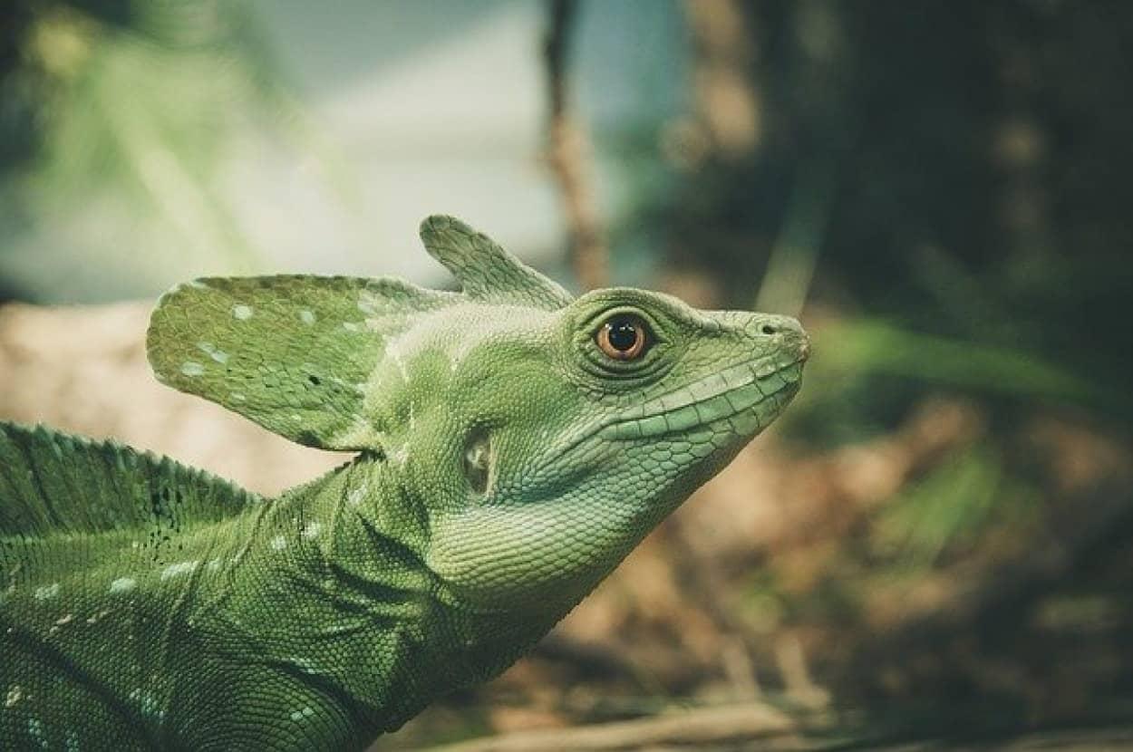 lizard-1935081_640