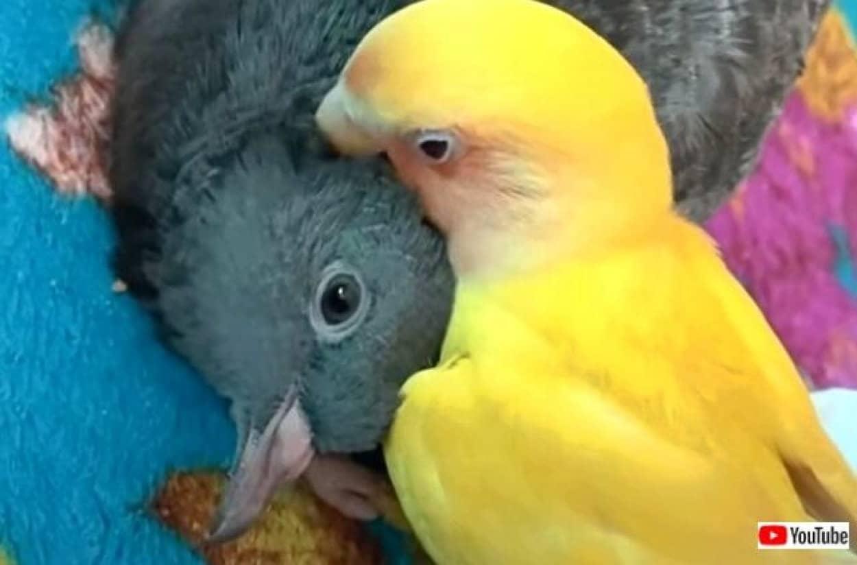 parrotnpigeon2_640