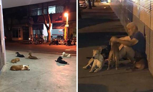 脳卒中で倒れた飼い主を心配した6匹の犬が病院の前で夜通し待っていた(ブラジル)