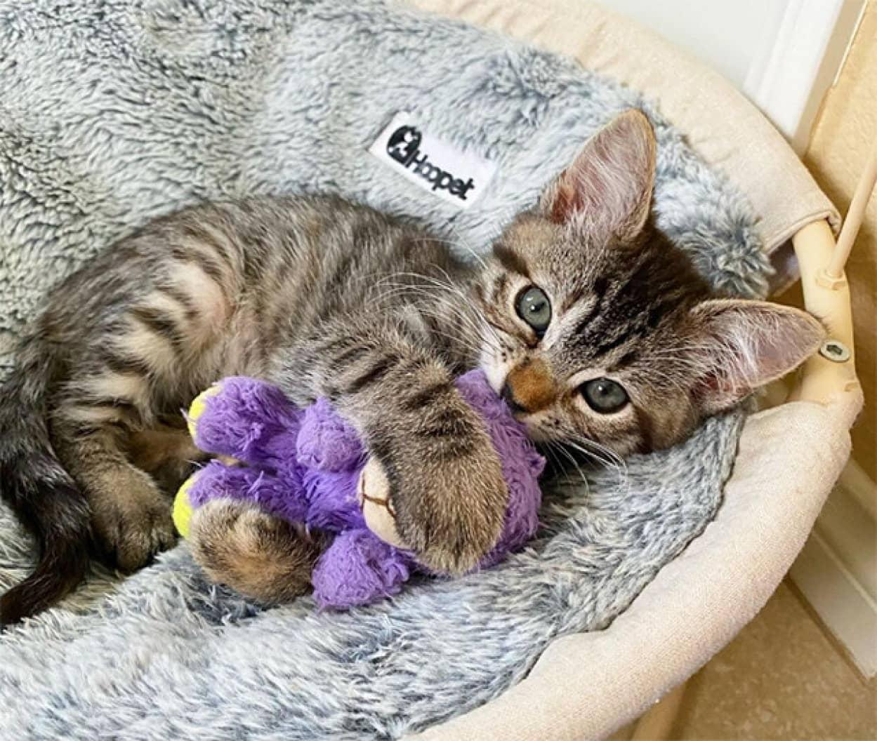 お気に入りのぬいぐるみに出会った子猫、健康状態がぐんぐん回復
