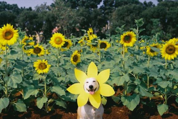 気分が憂鬱?犬のグルタさんに元気を分けてもらおう!病気と闘いながらも明るく生きる、タイの元野良犬。