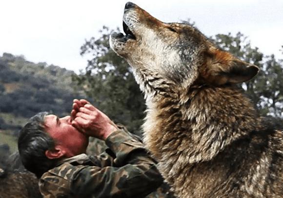狼に育てられた男、人間としての暮らしに失望している(スペイン)