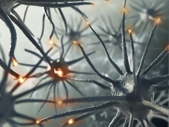 体内に入った精子により記憶力が向上するミバエのメス(フランス研究)