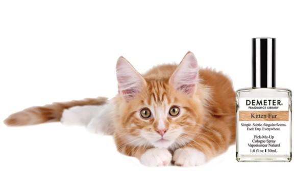 kitty1_e