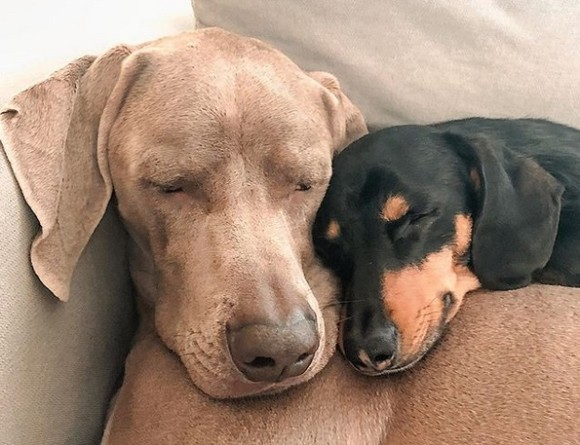 親友を得て心の傷から立ち直った犬