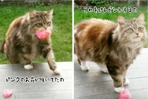 「きれいなお花が咲いてたの」自宅の庭にある花を口にくわえ、プレゼントしにくる愛すべき隣人の猫