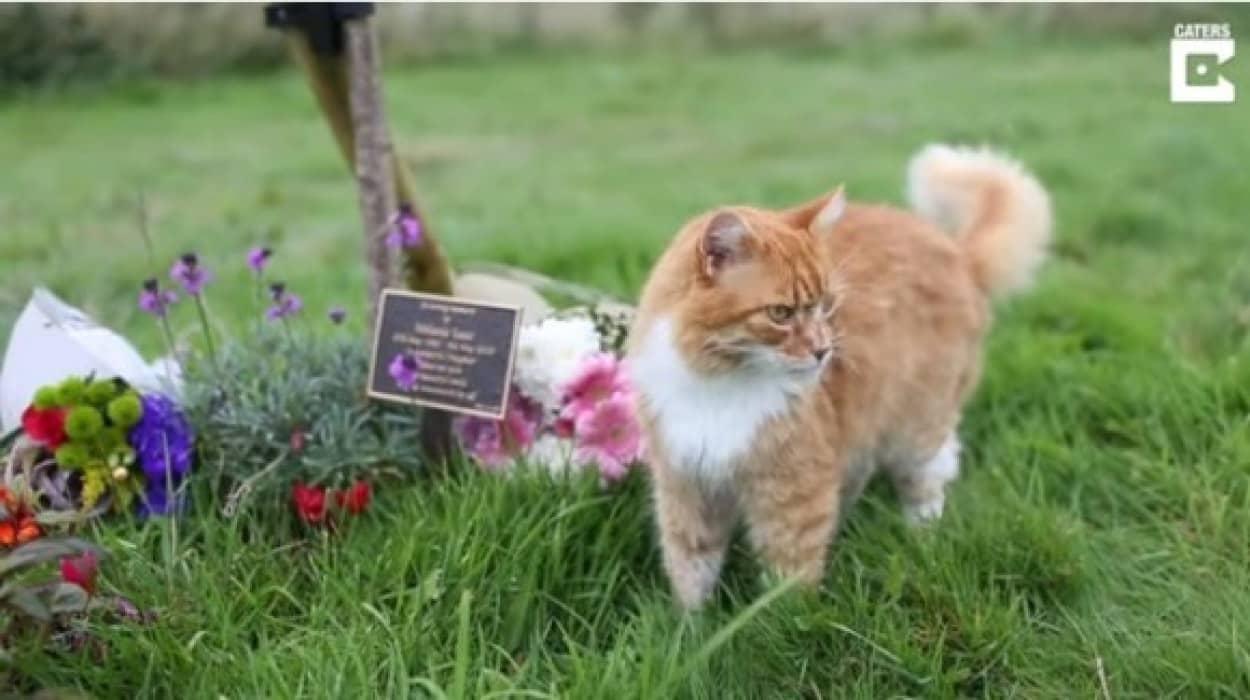 funeral cat7_e