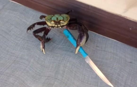 crab3_e