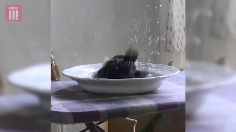 bathing_e