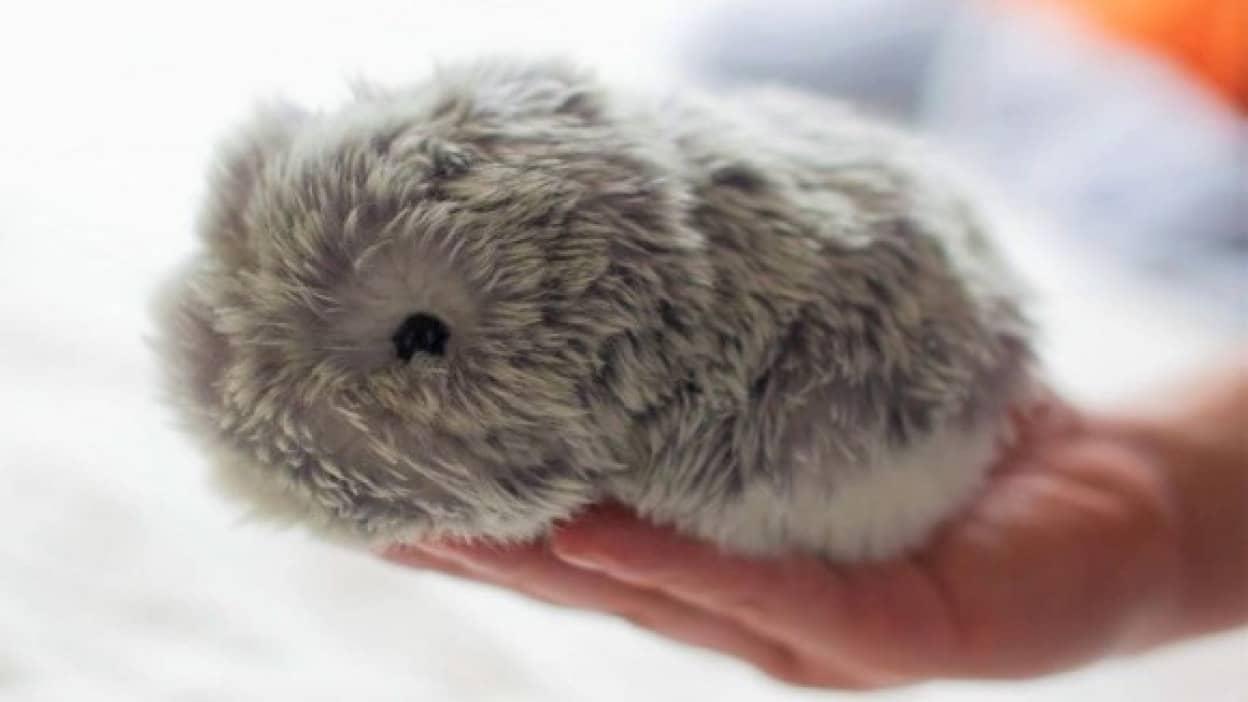 本物の小動物みたいなかわいらしさ、ペットロボット「モフリン」