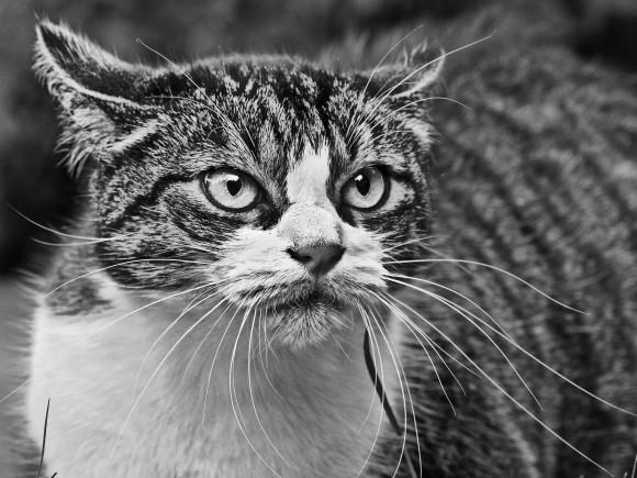 cat-1865546_pixabay_e