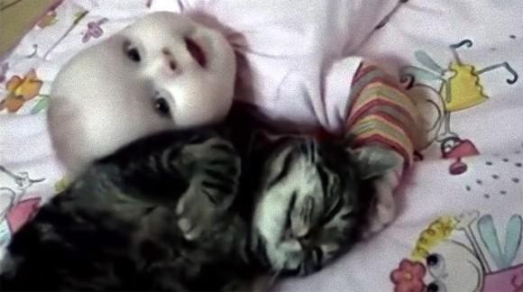 赤子は好物。赤ちゃんが大好きすぎる猫たちの映像総集編