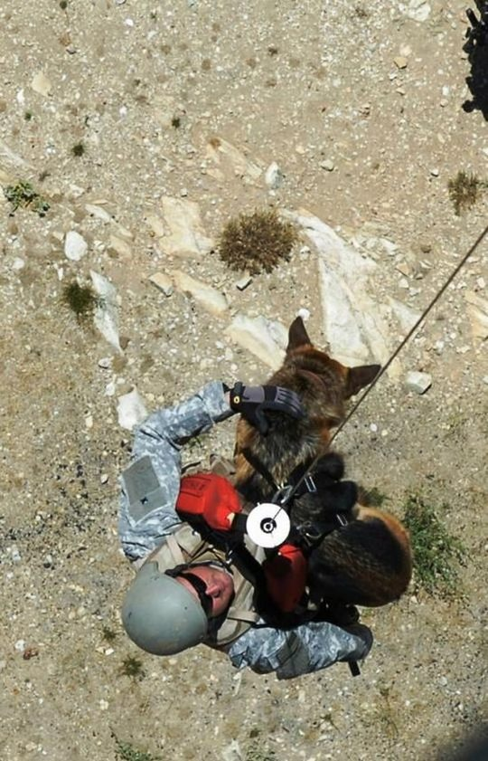 dogs_in_army_15