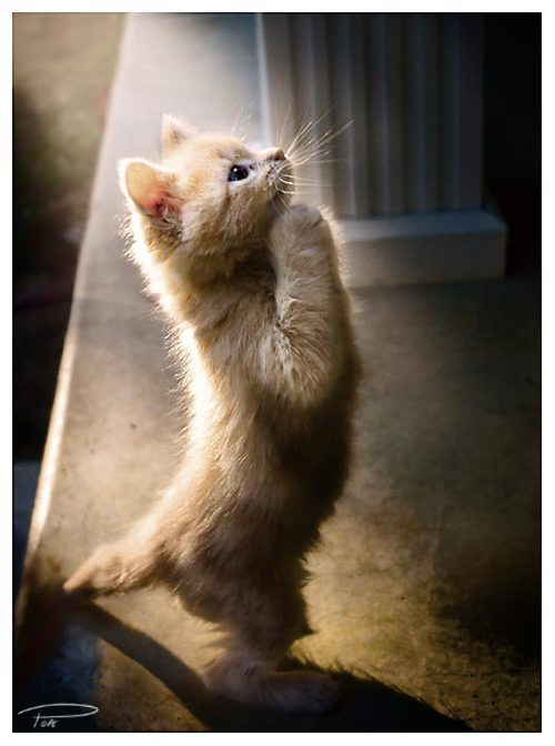 お願いしますだ」祈る動物たちの...