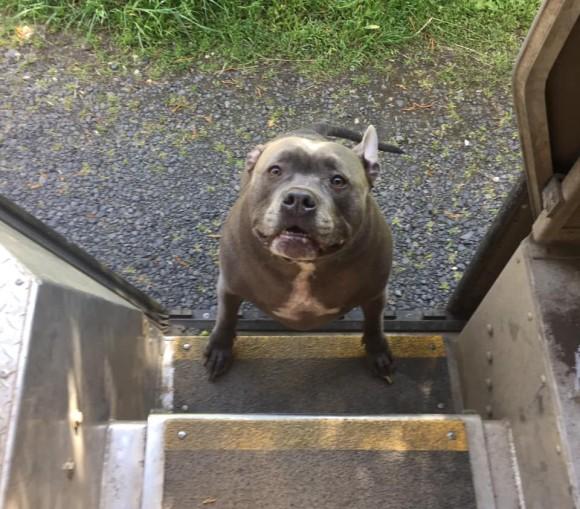 また会えてうれしいよ!配達ルートで出迎えてくれる犬たちを運送ドライバーがシェア(アメリカ)
