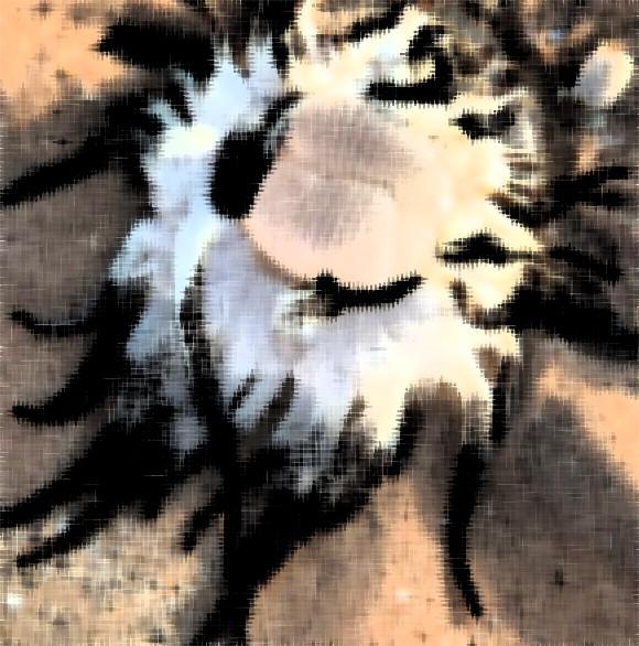なにこの触手!西オーストラリアの海岸で発見されたこの生き物の正体は?