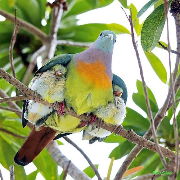 羽毛100%でやさしく包み込んでくれる。鳥の親御さんたちがヒナたちのお世話をするやさしい世界