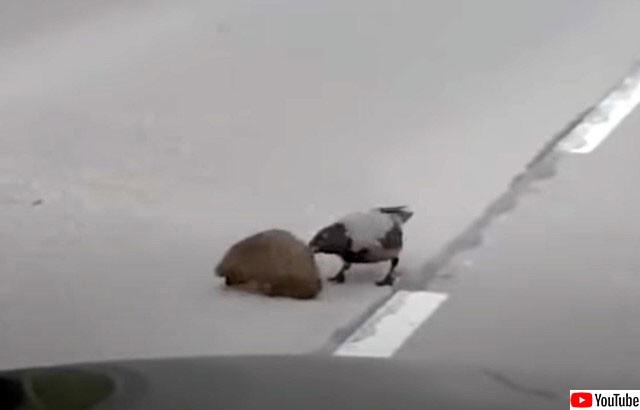 カラスとハリネズミ
