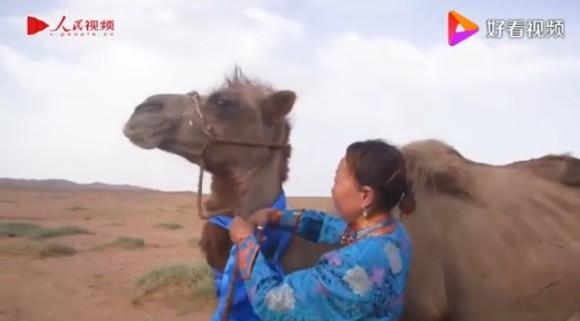 camel1_e