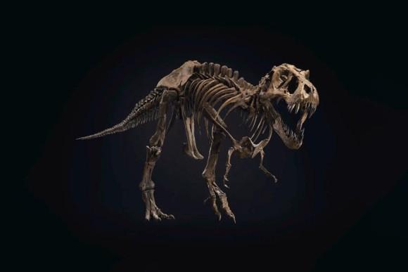 本物のティラノサウルスの骨格標本がオークションに