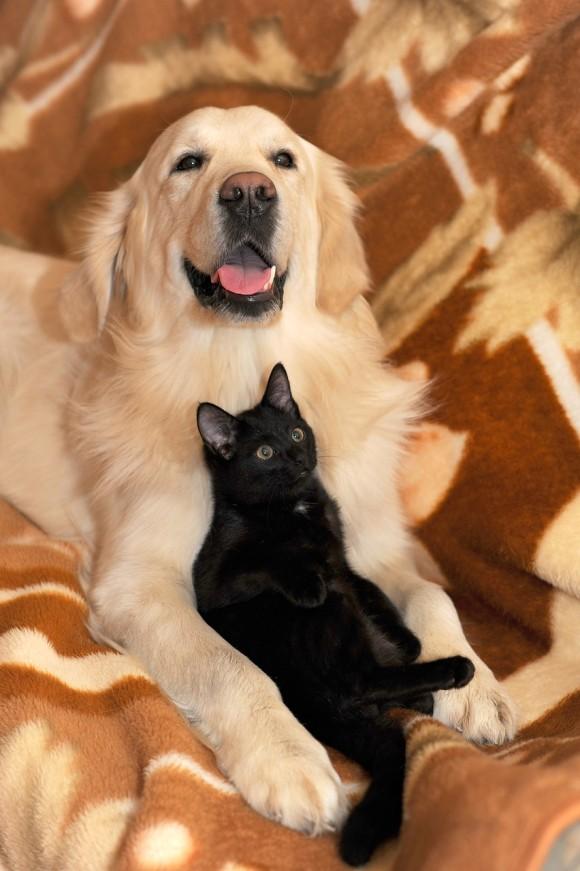 dog-and-cat-2908810_1280_e