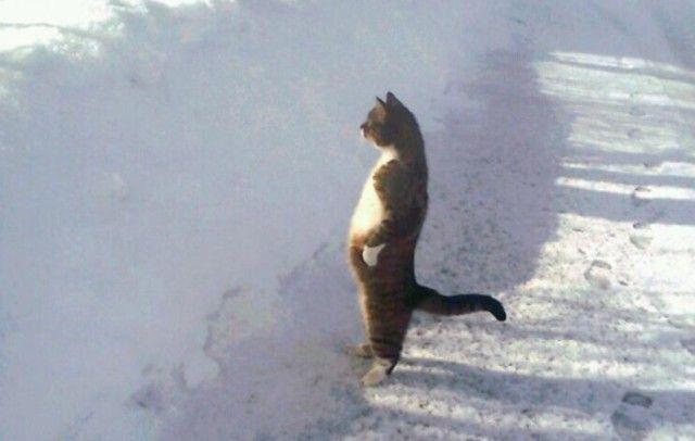 やはり猫の中には宇宙人が?という説を裏付ける証拠写真を集めてみた
