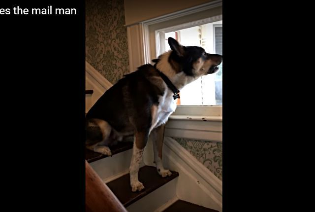 doghatesmailman2
