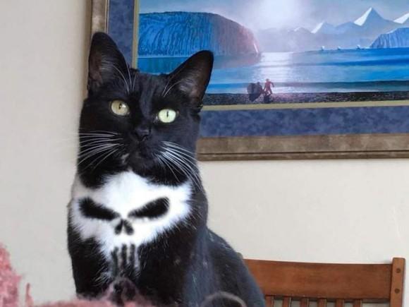 胸にドクロを宿した猫があまりにもかっこよすぎるのでコラ職人頑張る