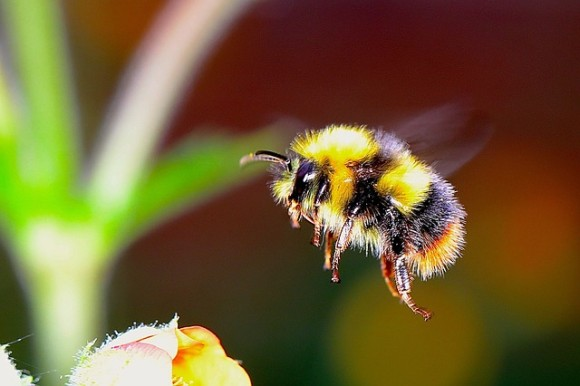 殺虫剤で依存症?ミツバチが殺虫剤を好んで食べるようになることが判明(英研究)