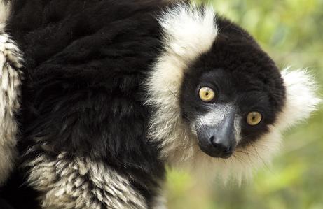 1_primates_461
