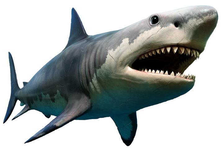 巨大の怪物ザメ「メガロドン」のサイズが明らかに。背びれだけでも人間の背丈に匹敵(英研究)