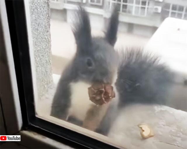 これと交換してください。女性からナッツをもらうために毎回必ず木の殻を持ってくるリス