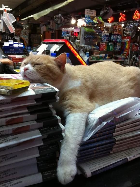 香港のコンビニ猫番長「クリーム兄貴」、クタっとしたその姿に熱視線集中