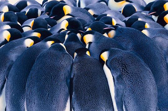 penguins_03