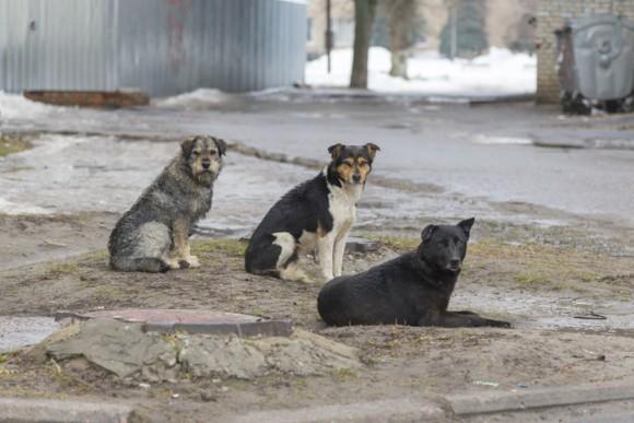 茂みに捨てられていた人間の赤ちゃんを助けが来るまで守り抜いた4匹の野良犬(インド)