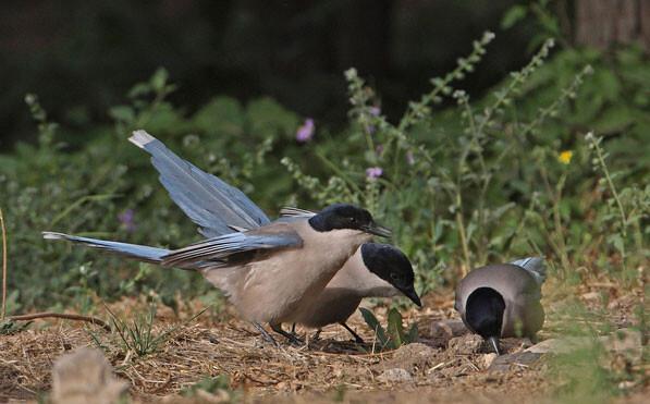 鳥にも共感力があり、仲間を思いやる