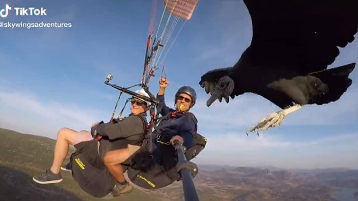 ハゲワシと一緒に飛ぶパラグライダー