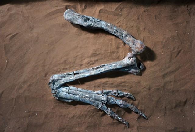 ディロフォサウルス・ウェテリリ