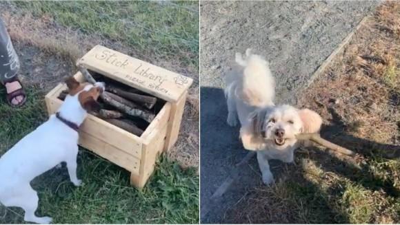 木の棒で遊ぶのが好きな犬たちのために、ドックパークに棒切れ図書館を開設した道具職人(ニュージーランド)
