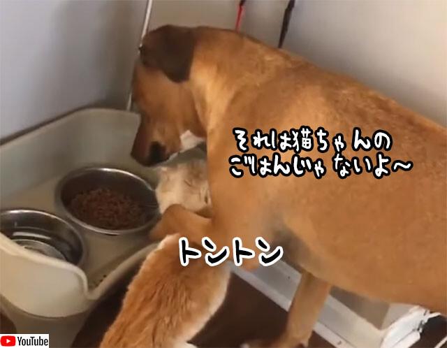 自分の餌を狙う猫をやさしく止める犬