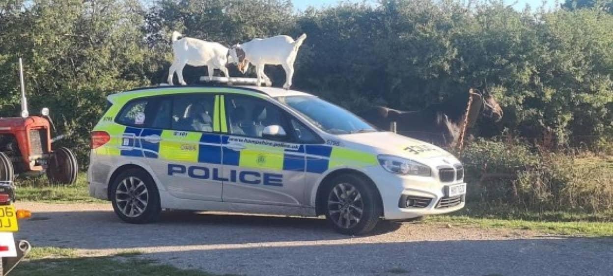 山羊がパトカーを乗っ取る事案