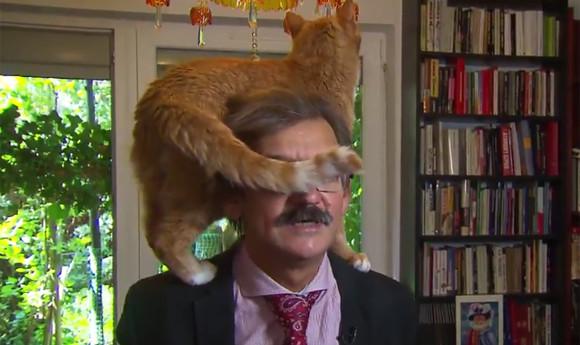 政治問題の解決策?猫と和解せよ。学者のテレビインタビューに乱入し、別の解決策を提案する猫(オランダ)