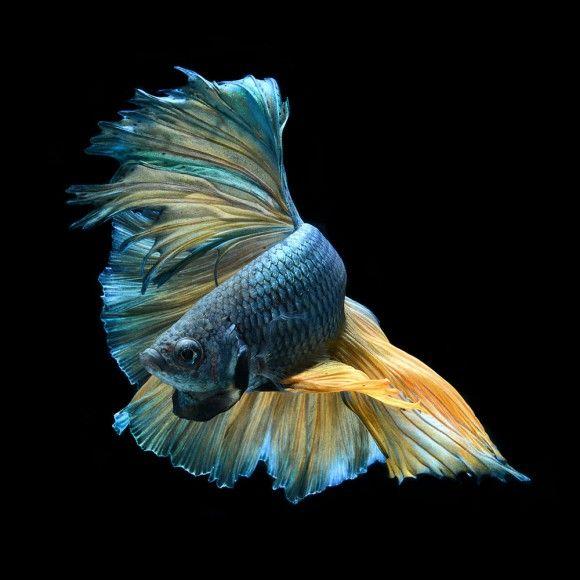 fish-2_e